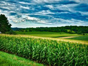Cover photo for Peak Season Soil Sampling Fees