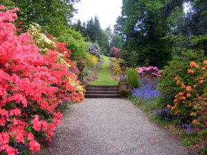 Garden Pathway with azaleas, irises and inviting trail up an incline.