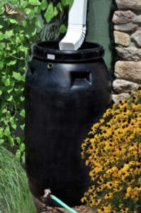 Cover photo for Rain Barrel Workshop